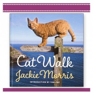 Cat-Walk-Jackie-Morris-photographic-book-children